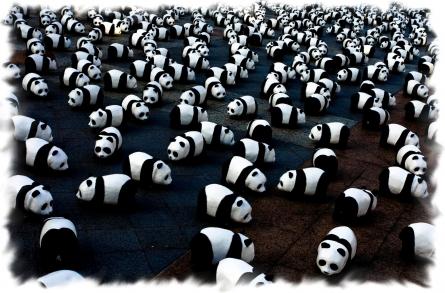 panda-assemblea.jpg